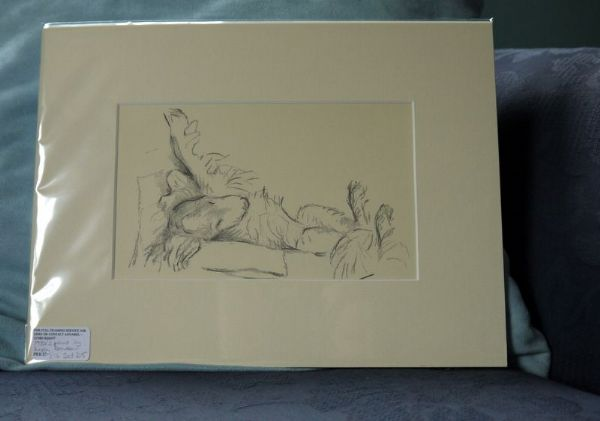 Irish Setter - lying on back, legs raised 1930's print by Lucy Dawson - Set D5